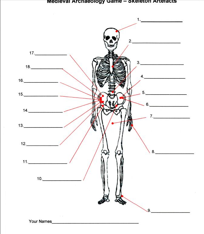 medieval teacher led activities | happening history, Skeleton