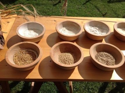 Medieval grains